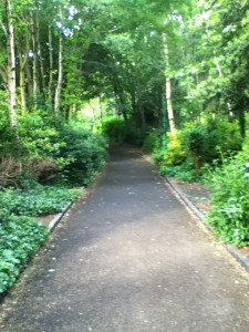 One of the paths through Merrion Square
